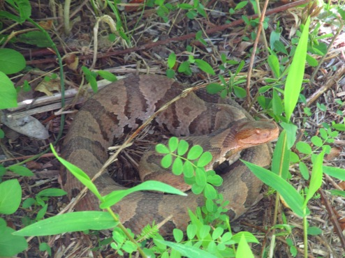Gettin' My Snake: How NOT to Catch a Rattlesnake – Keep ...