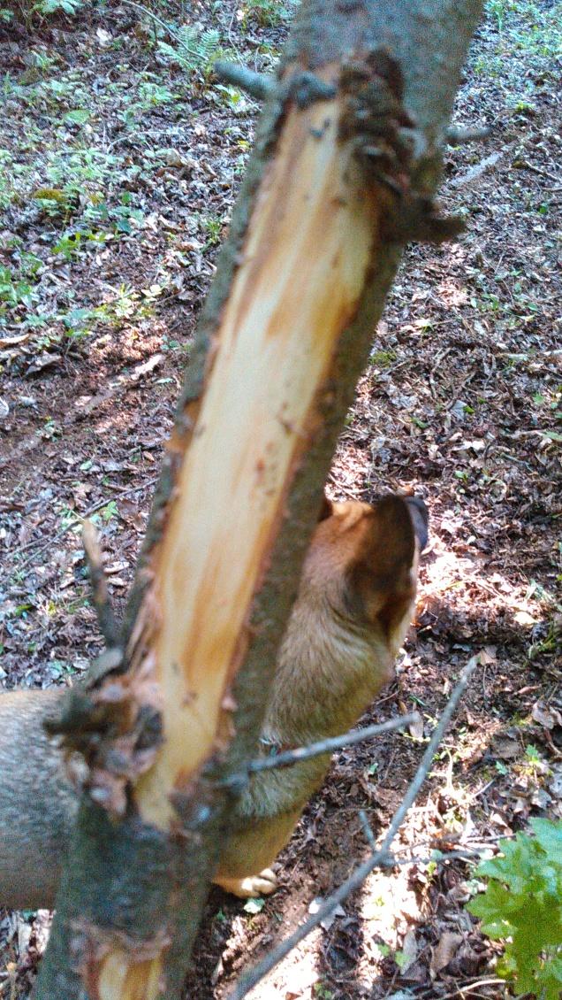 Damage to Side Tree