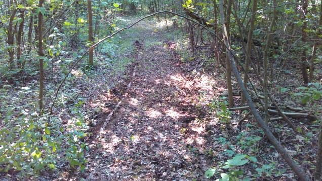 Tree Across Pathway